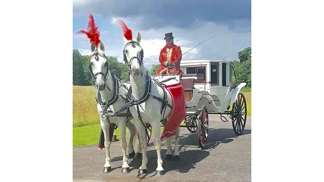 Horse Drawn Carriage Selection