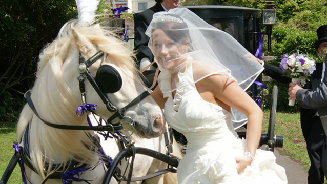 Quality Wedding Horse and Carriage Hire Service